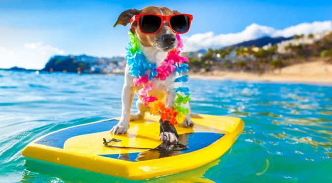 summertime-dog32316433_l